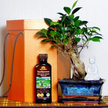 Бонсай в подарок Будда