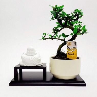 Бонсай с Буддой в ассортименте